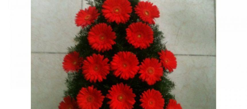 jerba de la floraria anemone bucuresti